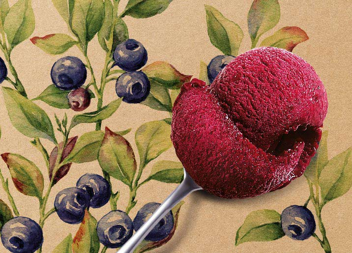 Sorbet Plein Fruit Myrtille sauvage